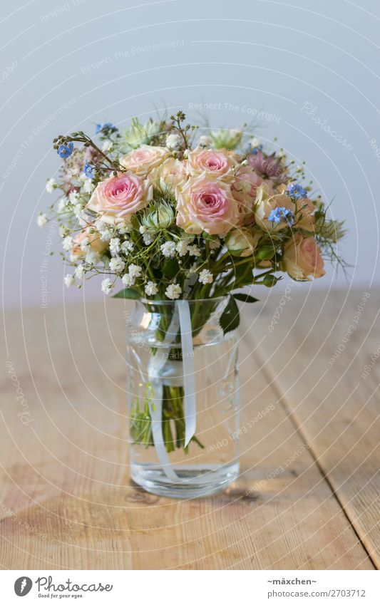Plant Blue Beautiful Green White Flower Leaf Yellow Blossom Natural Grass Orange Pink Glass Bushes Wedding