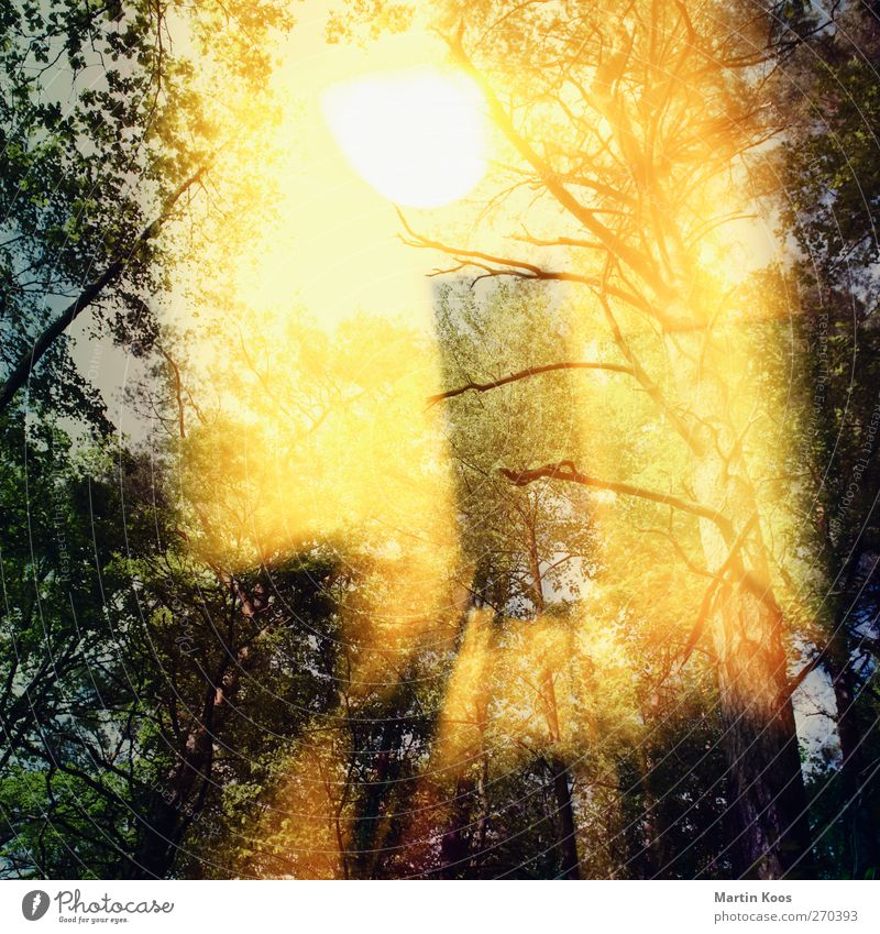 indoor/outdoor Lamp Room Nature Sky Sun Tree Forest Esthetic Glittering Speed Warmth Wild Yellow Gold Movement Double exposure Multicoloured Exterior shot