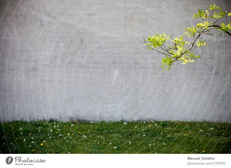 enter the copyspace Plant Spring Tree Grass Meadow Town Deserted House (Residential Structure) Factory Architecture Wall (barrier) Wall (building) Concrete