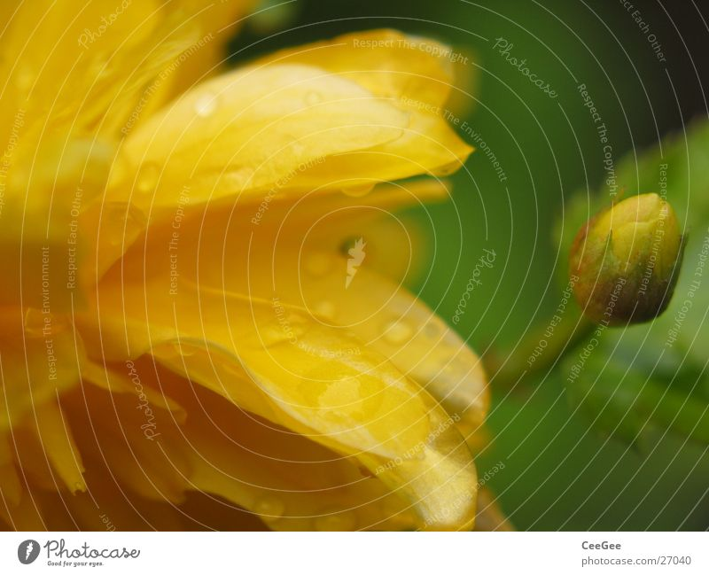 yellowish-green Plant Flower Blossom Blossom leave Leaf Yellow Green Pistil Nature Macro (Extreme close-up) Close-up