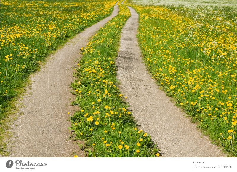 overland route Environment Nature Landscape Summer Beautiful weather Flower Dandelion field Meadow Transport Traffic infrastructure Street Lanes & trails Sign