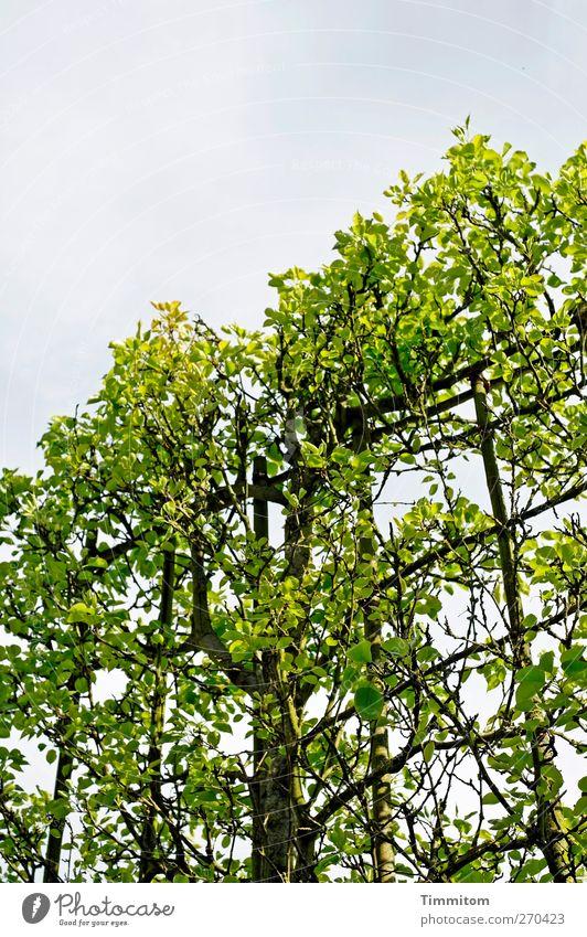 Dream/Alptraum Environment Nature Plant Sky Spring Tree Park Heidelberg Outskirts Wood Growth Green Black Emotions Repression Bans growth aid default Boundary