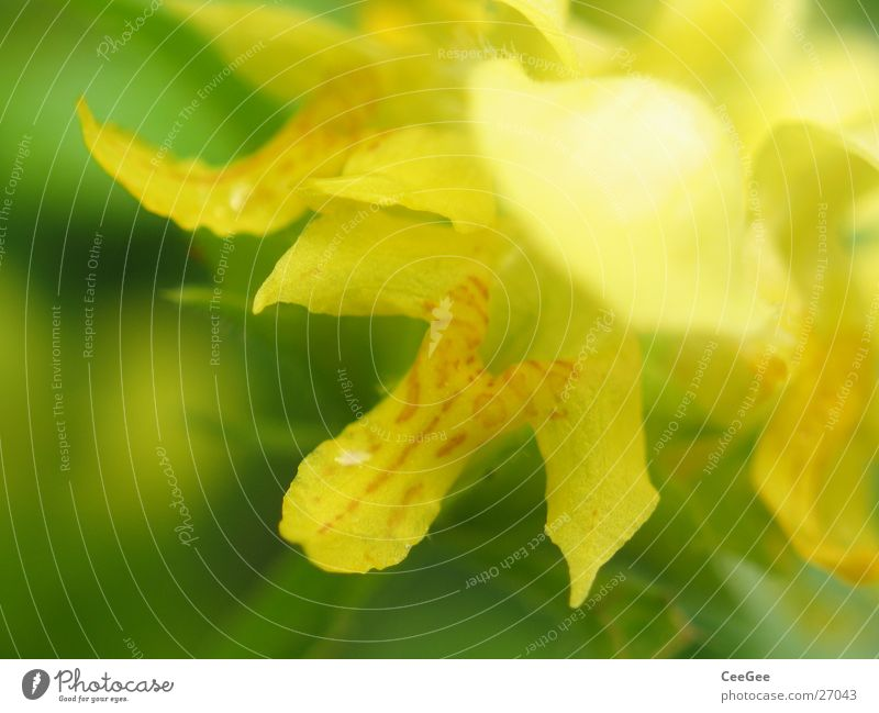 Nature Green Plant Flower Leaf Yellow Blossom Soft Blossoming Pistil Section of image Partially visible Blossom leave