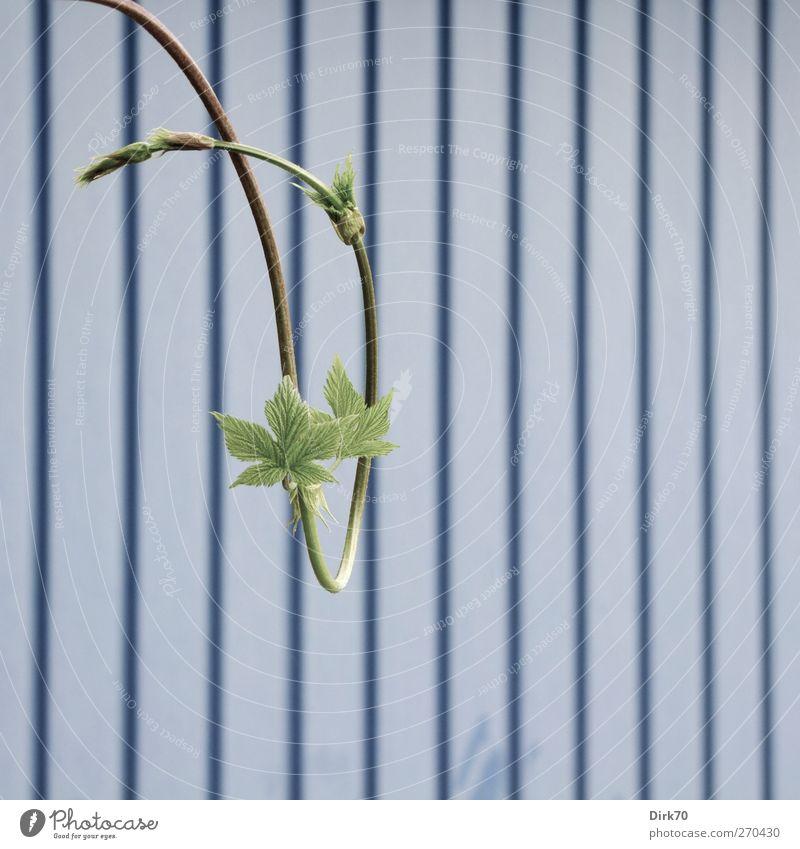 Nature Blue Green Plant Life Spring Garden Metal Line Elegant Growth Esthetic Stripe Change Vine Gate
