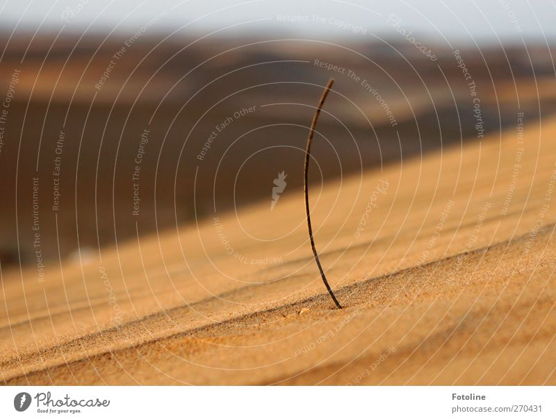 Nature Plant Environment Warmth Grass Sand Bright Natural Growth Desert Hot Desert plant