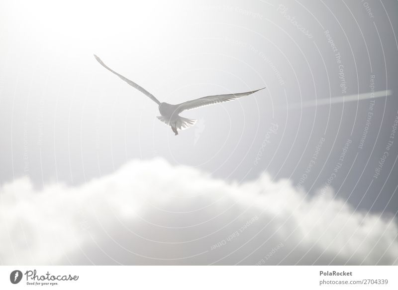 #AS# High White Art Work of art Esthetic Flying Bird Bird's-eye view Flight of the birds Seagull Gull birds Floating Ease Bright Summer Sun Coast Animal