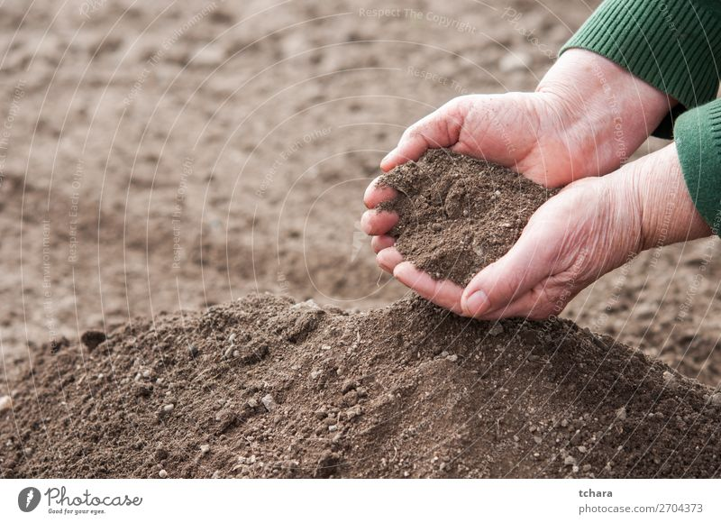 Hands full with fertile soil Garden Gardening Environment Nature Earth Dirty Dark Fresh Wet Natural Rich Brown Black Consistency background Ground agriculture