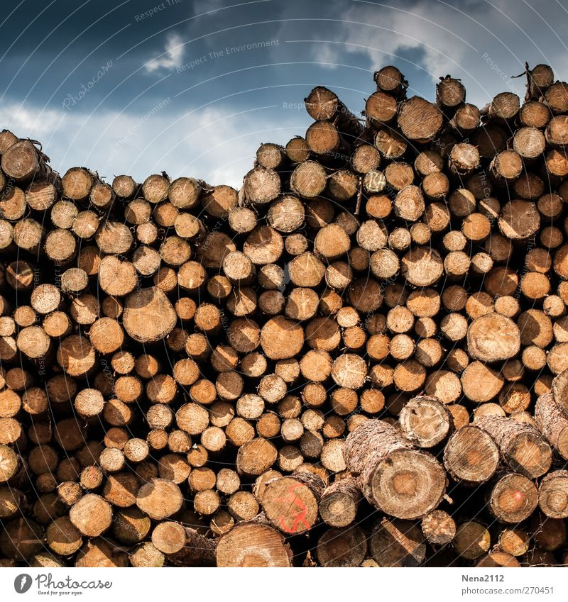 winter stock Agriculture Forestry Sky Clouds Storm clouds Thunder and lightning Tree Wood Dark Round Dry Many Brown Stack Stack of wood Storage Tall