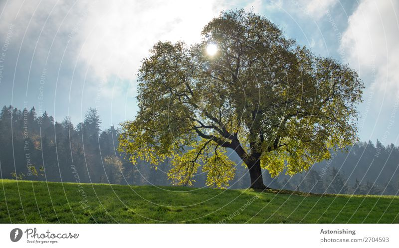 Sky Nature Old Summer Plant Blue Green Landscape Sun Tree Clouds Loneliness Leaf Forest Yellow Environment