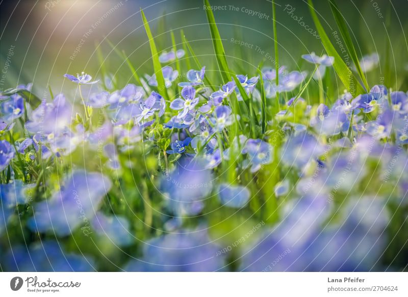 Field of fresh morning flowers in spring time Nature Landscape Plant Flower Grass Emotions Happiness Passion card Meadow flower Delicate Fragrant Delicacy Rural