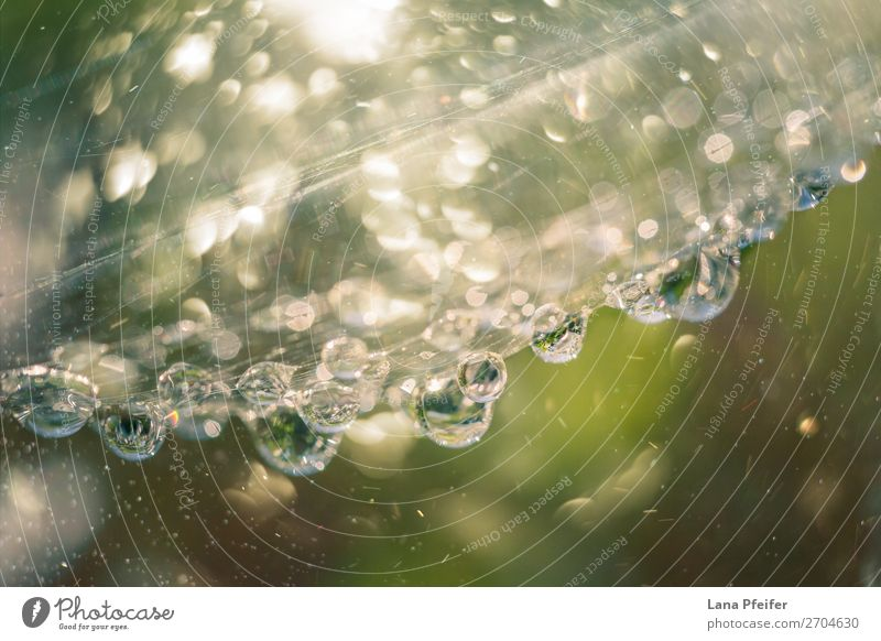 Surface of a leaf covered in water droplets Nature Plant Jump Fluid Fresh Soft Yellow Green bloom flower morning Planning dew Margin of a field wet glistening