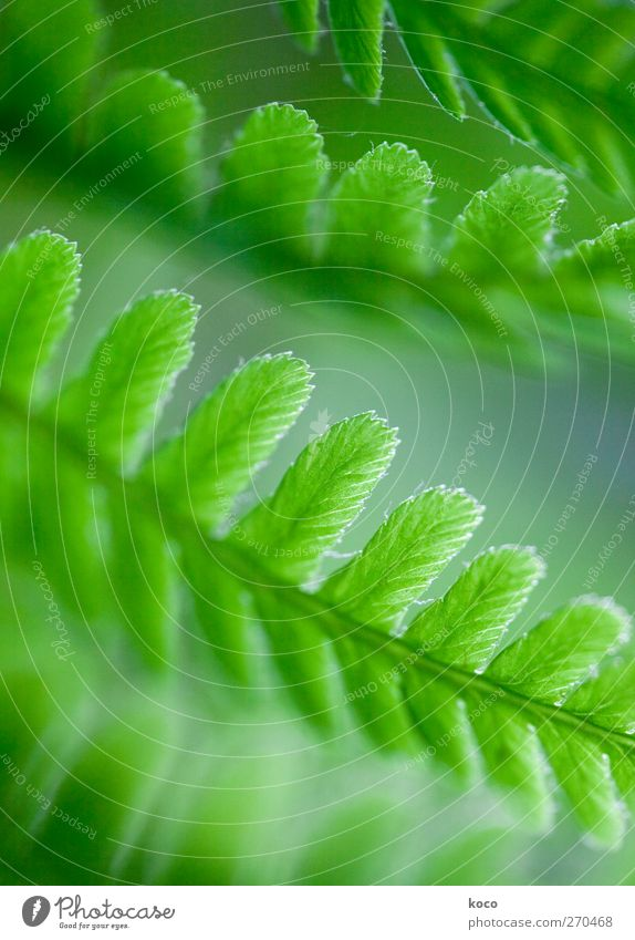 fa(r)ntastic Nature Plant Sunlight Spring Summer Wind Fern Leaf Foliage plant Line Blossoming Growth Authentic Simple Fresh Beautiful Near Natural Blue Green