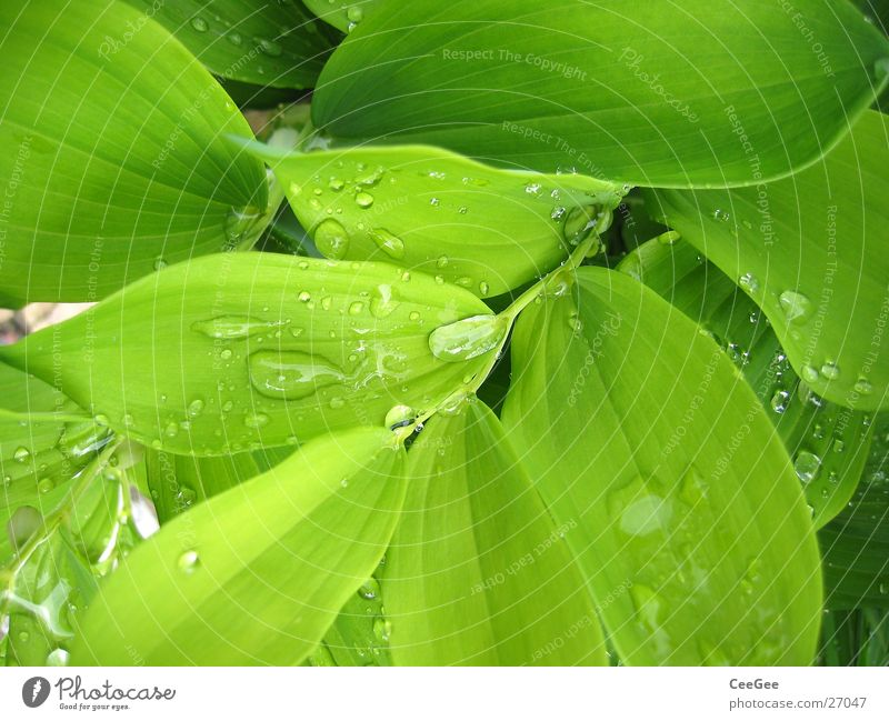 Nature Water Flower Green Plant Leaf Rain Drops of water Wet Damp Twig