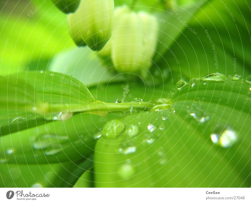 Nature Water White Flower Green Plant Leaf Blossom Rain Drops of water Wet Damp Hang Twig