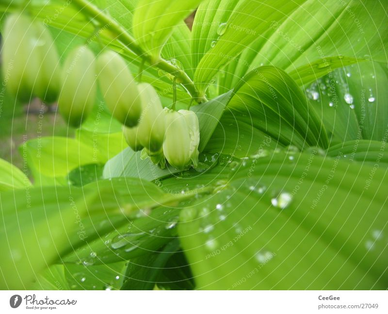 Nature Water White Flower Green Plant Leaf Blossom Rain Drops of water Wet Row Damp Twig Suspended