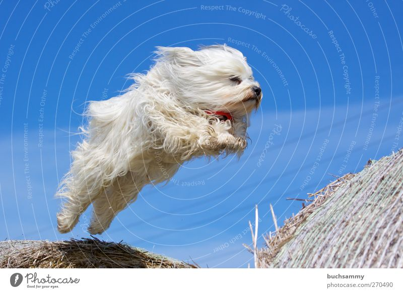 Dog Nature Blue White Animal Playing Happy Jump Exceptional Air Flying Wild Speed Cool (slang) Pelt Athletic