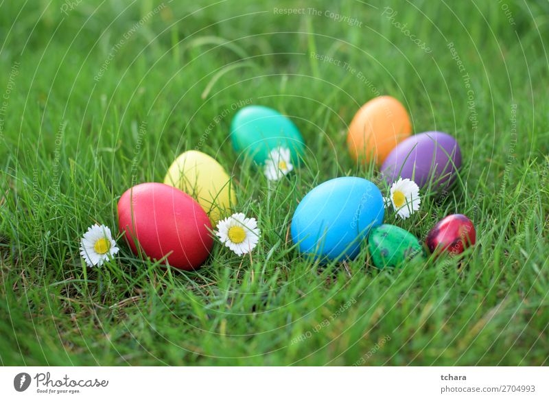 Colored Easter eggs in a grass Design Happy Beautiful Hunting Sun Decoration Feasts & Celebrations Group Nature Sky Flower Grass Meadow Bright Natural Cute Blue
