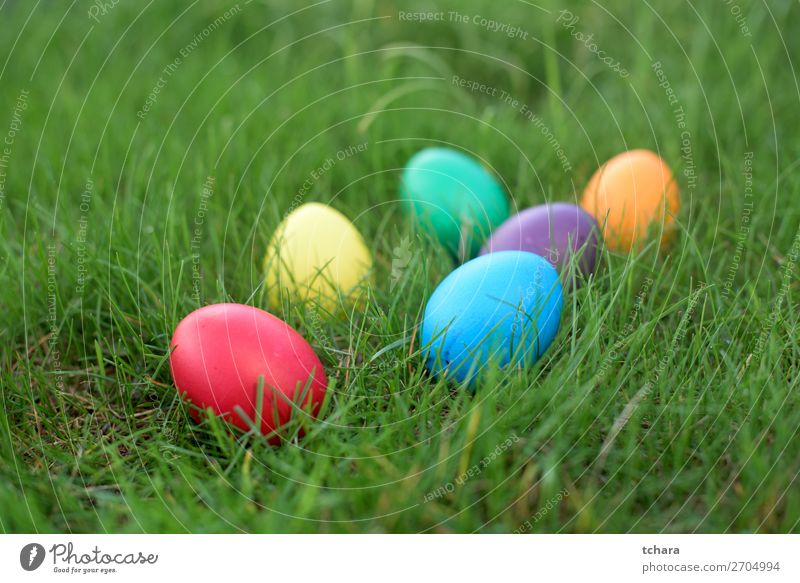 Easter hunt - colored hen eggs in a grass Design Happy Beautiful Hunting Sun Decoration Feasts & Celebrations Group Nature Sky Flower Grass Meadow Bright