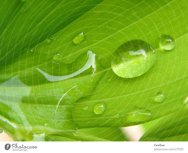 Nature Water Flower Green Plant Leaf Rain Drops of water Wet Damp