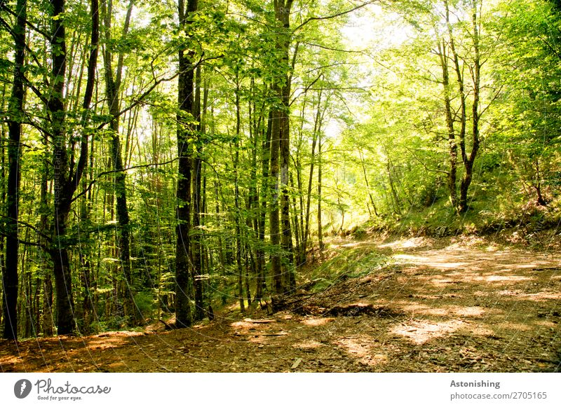 In the curve Environment Nature Landscape Plant Summer Weather Beautiful weather Tree Forest Albania Lanes & trails Bright Yellow Green Tree trunk Leaf canopy