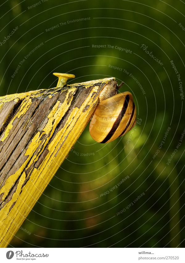 Green Animal Yellow Movement Tall Success Target Peak Climbing Derelict Brave Stress Upward Willpower Career Effort