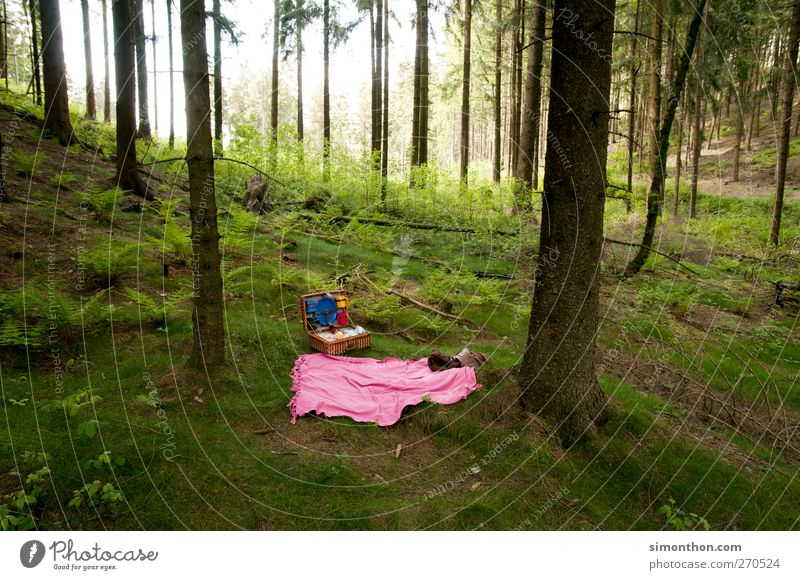 picnic Environment Relaxation Picnic Picnic basket Forest Trip Vacation & Travel Free Pink Places Clearing Teutoburg Forest Tree Colour photo