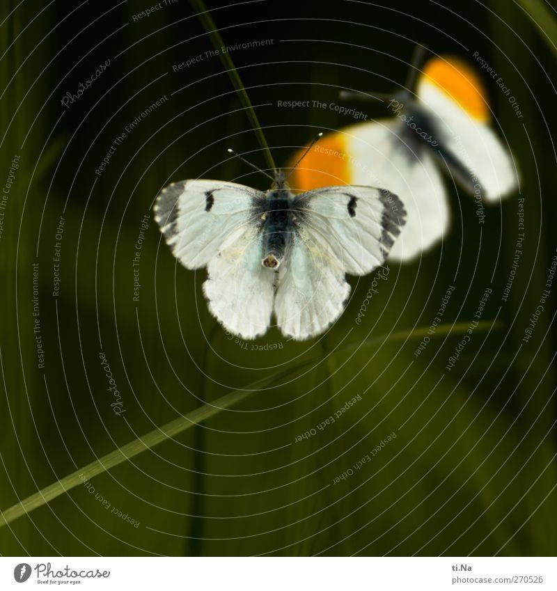 Nature White Green Beautiful Animal Environment Love Feminine Grass Spring Gray Garden Orange Flying Wild animal Wing