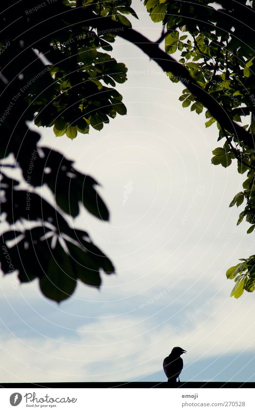 Sky Nature Tree Plant Animal Black Environment Bird