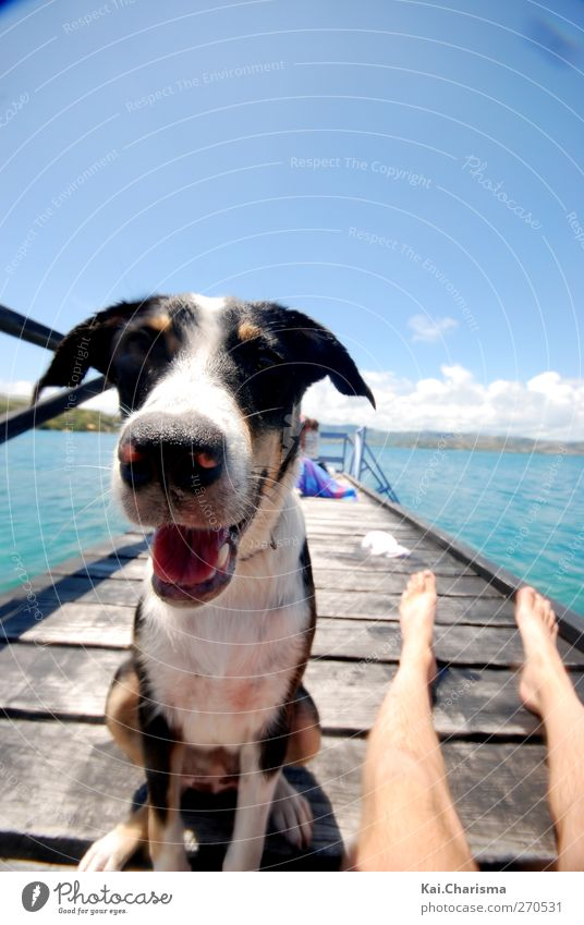 Iceland Dog Summer Island Animal Pet 1 Joy Happy Colour photo Exterior shot Copy Space top Day Animal portrait