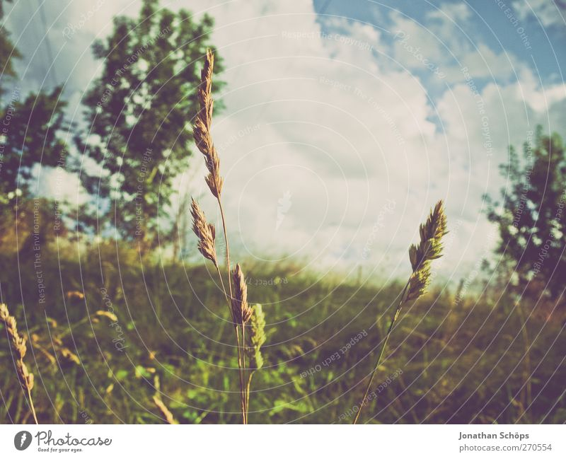 reclining Environment Nature Sky Beautiful weather Plant Tree Grass Foliage plant Meadow Relaxation To enjoy Dream Moody Contentment Joie de vivre (Vitality)
