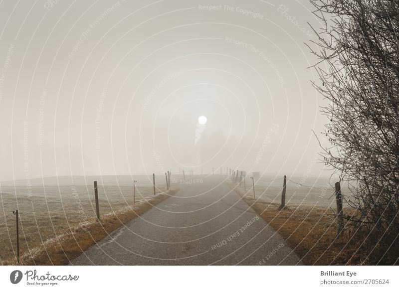 Nebulised sun Trip Winter Nature Landscape Sun Sunlight Fog Field Deserted Threat Cold Natural Soft Gray Beginning Perspective Frost Lanes & trails Fence Dreary