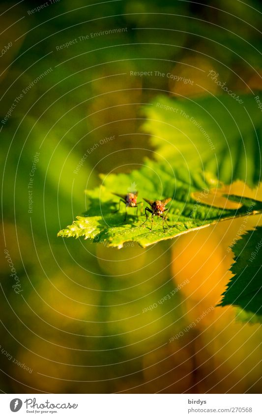Nature Plant Green Summer Leaf Animal Yellow Warmth Spring Natural Together Fly Pair of animals To enjoy Beautiful weather Warm-heartedness