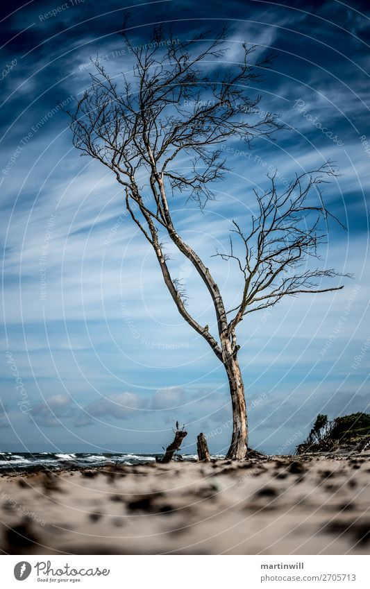 Lonely tree on the beach waiting for the next storm surge Vacation & Travel Tourism Trip Beach Ocean Nature Landscape Sky Clouds Climate Climate change Wind