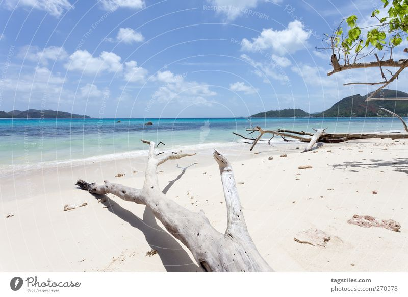 Nature Vacation & Travel Ocean Beach Landscape Coast Sand Travel photography Island Tourism Idyll Africa Card Tree trunk Untouched Seychelles