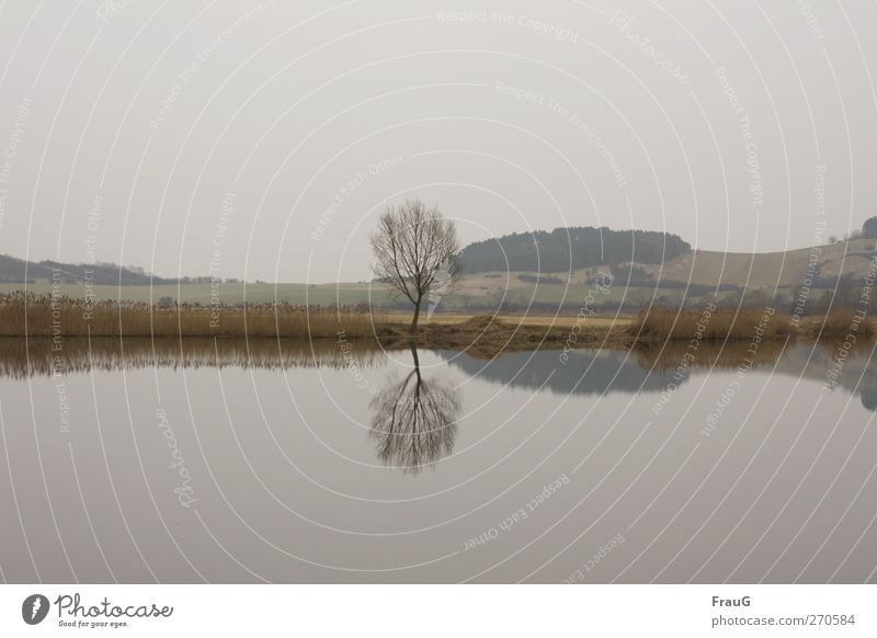 Sky Nature Water Tree Calm Landscape Spring Wood Gray Lake Brown Esthetic Bushes Mirror