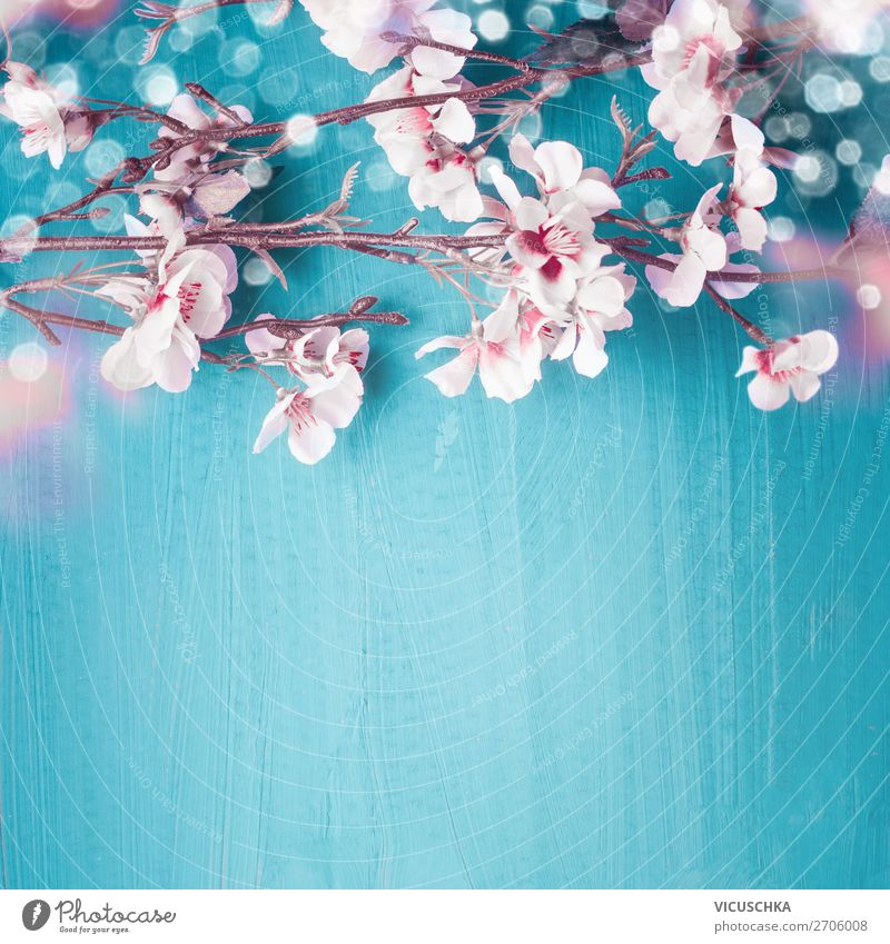Cherry blossoms on turquoise with bokeh, spring background Style Design Feasts & Celebrations Nature Plant Spring Leaf Blossom Decoration Bouquet Turquoise