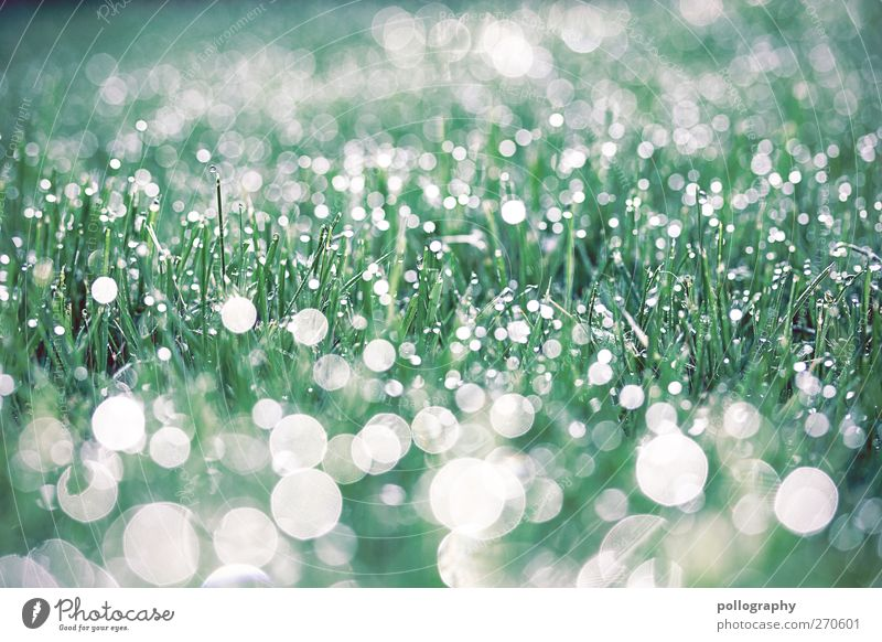 Nature Water White Green Beautiful Plant Meadow Grass Spring Garden Bright Glittering Fresh Drops of water Beautiful weather Point