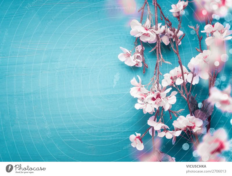 Spring cherry blossom twigs on turquoise blue Style Design Decoration Feasts & Celebrations Nature Plant Flower Leaf Blossom Hip & trendy Pink Turquoise White