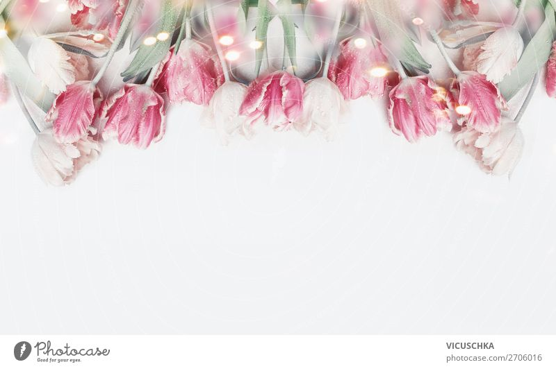 Pastel pink tulips on white background Style Design Decoration Feasts & Celebrations Valentine's Day Mother's Day Wedding Birthday Plant Spring Flower Tulip