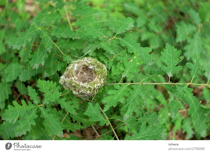 Nest of the oak tree Nature Man Colour Green Tree Animal Leaf Forest Adults Life Environment Natural Building Small Bird Wild
