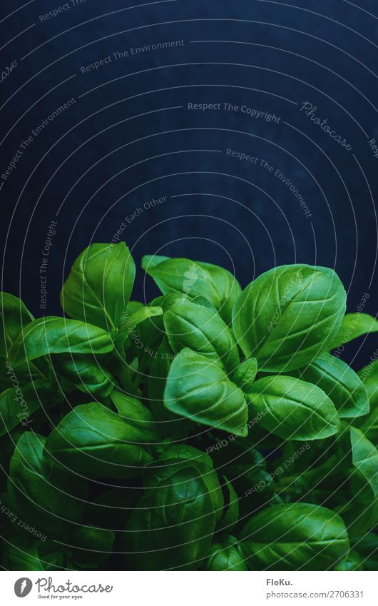 basil Food Lettuce Salad Herbs and spices Nutrition Eating Organic produce Vegetarian diet Italian Food Plant Leaf Fresh Delicious Natural Blue Green Basil