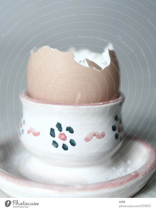 breakfast rest Food Egg Egg cup Nutrition Breakfast Brown Gray Empty Eggshell Colour photo Interior shot Studio shot Copy Space top Neutral Background Morning