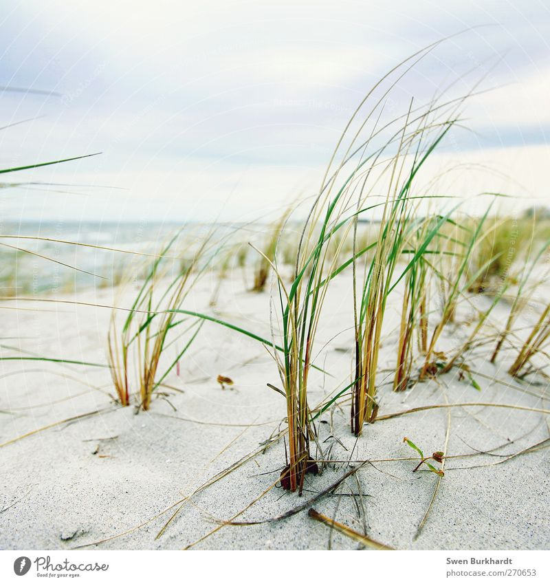 Sky Nature Water Vacation & Travel Plant Summer Ocean Beach Clouds Far-off places Environment Landscape Grass Coast Sand Air