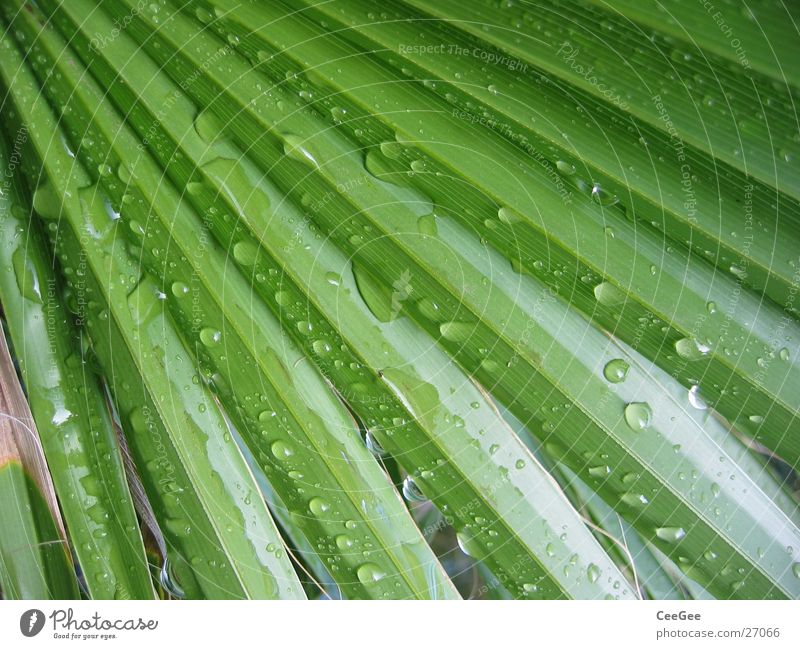 After the rain Leaf Rain Palm tree Green Plant Water Nature Close-up Macro (Extreme close-up) Structures and shapes Line