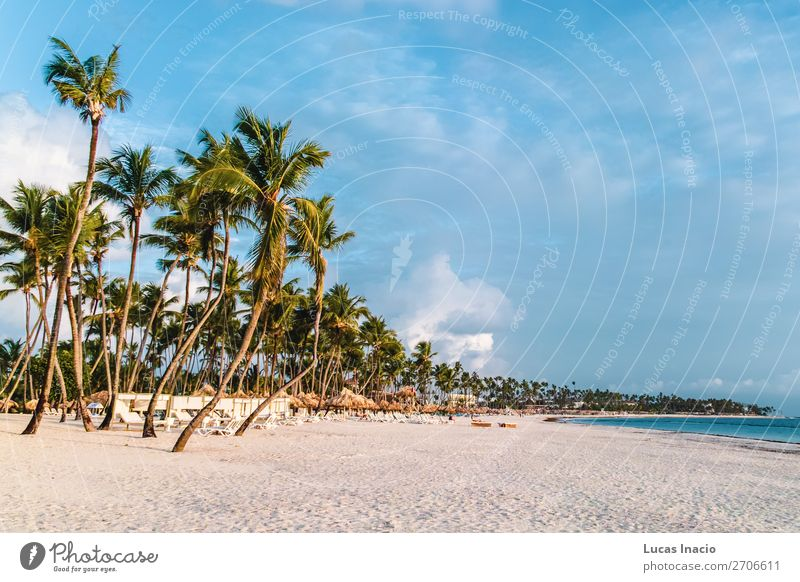 Bavaro Beaches in Punta Cana, Dominican Republic Vacation & Travel Tourism Summer Ocean Island Environment Nature Sand Tree Leaf Coast Wanderlust America