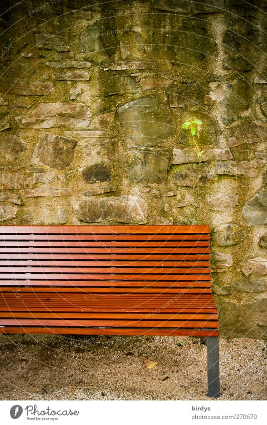 Plant Calm Relaxation Wall (building) Wall (barrier) Park Authentic Break Simple Partially visible Park bench Stone wall