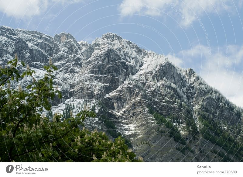 Mountain at Königssee Vacation & Travel Tourism Trip Hiking trip Environment Nature Landscape Plant Sky Clouds Spring Beautiful weather Tree Leaf Rock Alps Peak