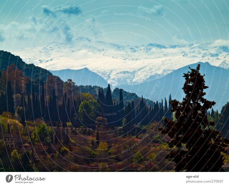 la sierra nevada (andalucia) Environment Nature Landscape Plant Sky Beautiful weather Snow Tree Mountain Sierra Nevada Snowcapped peak Observe Looking Fantastic