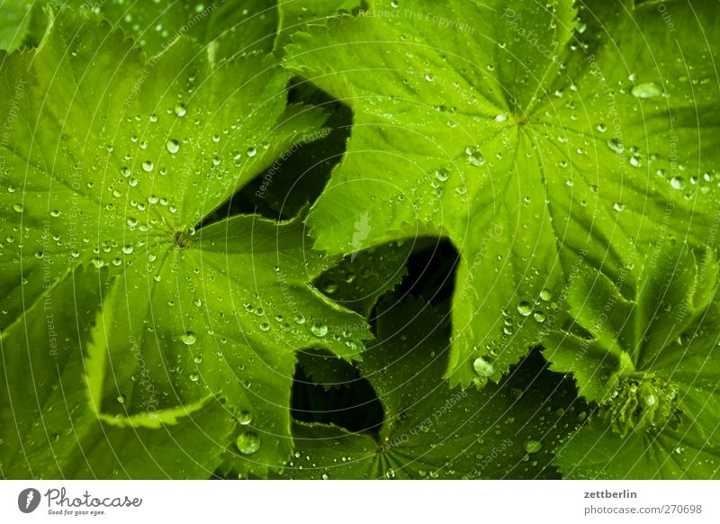 Nature Plant Summer Leaf Environment Landscape Garden Park Weather Climate Drops of water Good Storm Dew Thunder and lightning Climate change