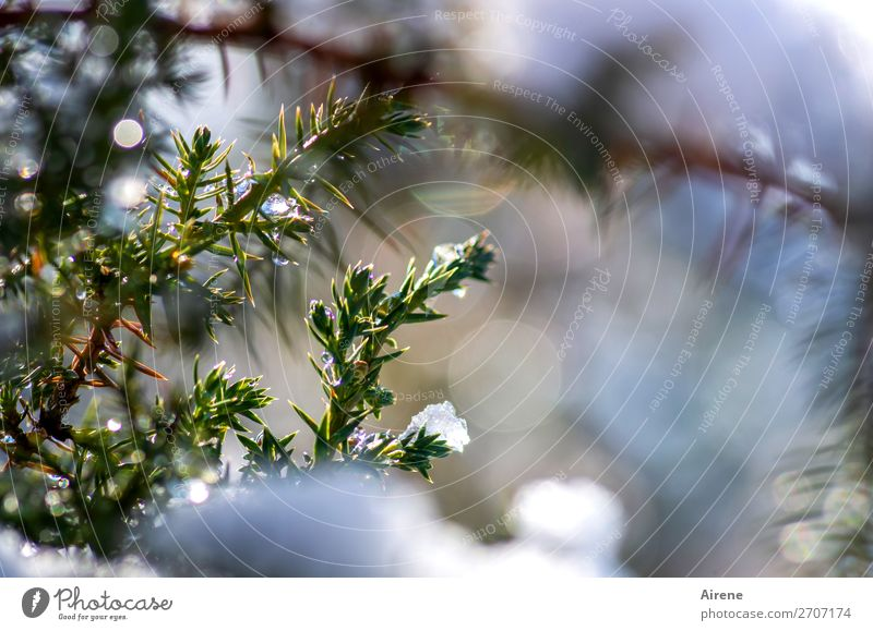 Nature Blue Green White Winter Cold Natural Snow Fresh Ice Glittering Joie de vivre (Vitality) Beautiful weather Frost Positive Freeze